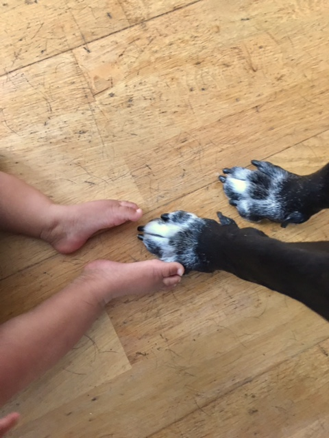 Dogs paws and childs feet